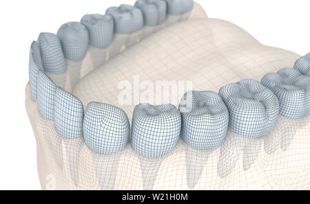 Mesh model of tooth  3d illustration Stock Photo: 242961059
