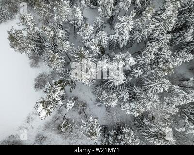 Snow-covered spruce forest from above, bird's eye view, Bavaria, Germany - Stock Photo