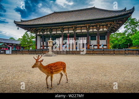 Kōfuku-ji Temple. A complex of Buddhist temple halls & pagodas, withan on-site museum showcasing national treasures. - Stock Photo