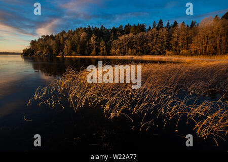 Early winter morning at Hvalbukt in the lake Vansjø in Østfold, Norway. Vansjø is a part of the water system called Morsavassdraget. - Stock Photo