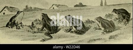 Archive image from page 10 of Das Leben unserer heimischen Lurche - Stock Photo
