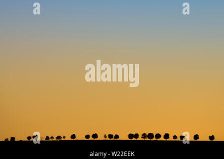 Minimalist landscape photo with yellow blue colored sky during sunset. Simple black silhouettes of alley trees in background, making an impression. - Stock Photo