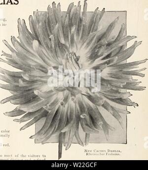 Archive image from page 15 of Dahlias (1914) - Stock Photo