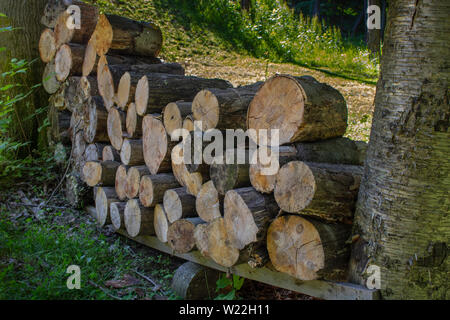 energy resource of cut tree logs for firewood stacked between two trees - Stock Photo