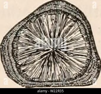 Archive image from page 106 of The cyclopædia of anatomy and - Stock Photo