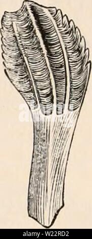 Archive image from page 107 of The cyclopædia of anatomy and - Stock Photo