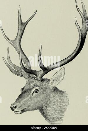 Archive image from page 115 of The deer of all lands; - Stock Photo