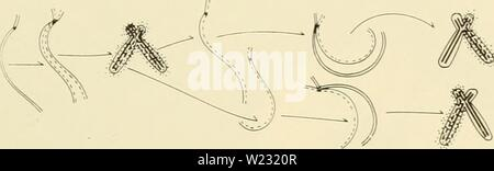 Archive image from page 126 of Cytology (1961) Stock Photo