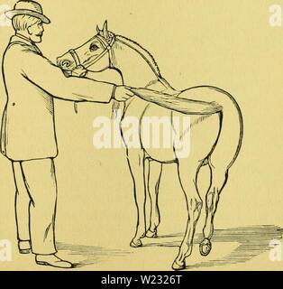 Archive image from page 126 of Das pferd Ein buch für. Das pferd. Ein buch für das volk, enthaltend:  daspferdeinbuchf01pitc Year: 1881  te (Srjielung be§ [erbeS. 119 felbe immerndler an ber ,al[tev, fe§c [idj akrgegen (Stoe oberSdIage vox, iDcnii mail von beii etten au§ jielt. jlommt man nun mit ber anb gnnj nale an hen 'opf, fo ge(;e man ganj [an[t oor nnb geftatte bem 3lf)tere bie anb mit bcr 9ta)'e ju untevfudjen — mit ber dlae attein roittert bag fevb bie efaljv unb iiberjeugt fid; oon bcr armlofigfeit beS ®egeuftanbc§, ber e§ beunrufjigt. 3Beun fid) ba§ '[erb altmdtjtig an cinen geroolj Stock Photo