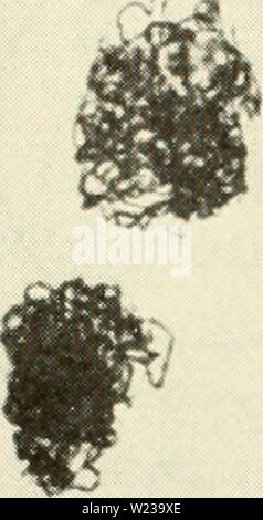 Archive image from page 147 of Cytology (1961) - Stock Photo