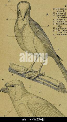 Archive image from page 148 of Die Kanarienvögel, Sprosser, Nachtigallen, Rothgimpel, - Stock Photo