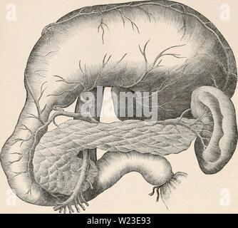 Archive image from page 157 of The cyclopædia of anatomy and - Stock Photo