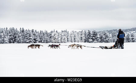 Finland, Inari - Jan 2019: Couple dog sledding over a frozen lake near to the forest , high contrast - Stock Photo