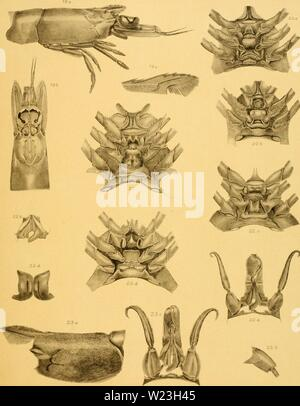 Archive image from page 164 of The Decapoda of the Siboga - Stock Photo