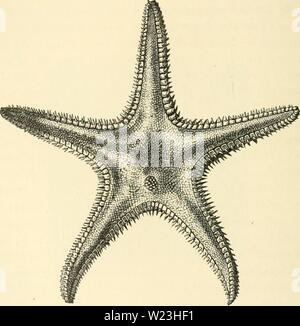 Archive image from page 165 of The depths of the sea; - Stock Photo