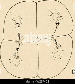Archive image from page 173 of Cytology, with special reference to - Stock Photo