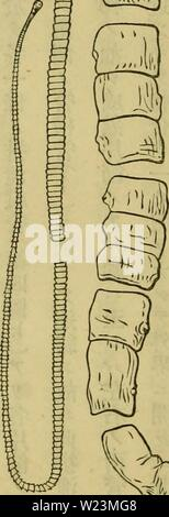 Archive image from page 173 of Dbutsugaku zasshi (1889) - Stock Photo