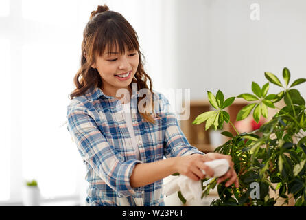 happy woman cleaning houseplant leaves at home - Stock Photo
