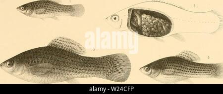Archive image from page 228 of The cyprinodonts (1895) - Stock Photo