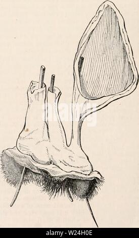 Archive image from page 241 of The cyclopædia of anatomy and - Stock Photo