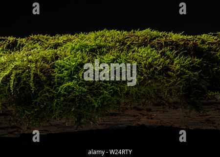 Moss on a rotten log in the forest - Stock Photo