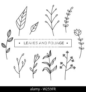 Set of floral, foliage, leaves and flower vector template. - Stock Photo