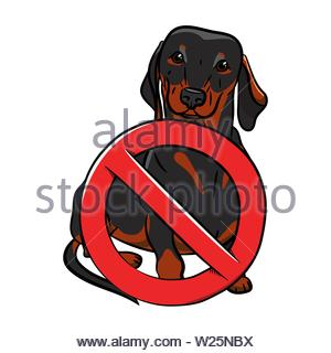 Dog. Black dachshund with a stop sign. Stop Dog. Hand-drawn Dog. Realistically Painted Dachshund. - Stock Photo