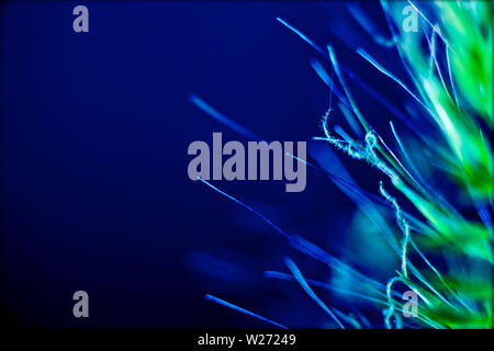 Blue beautiful macro stems in blue background and wallpapers in top high quality prints - Stock Photo