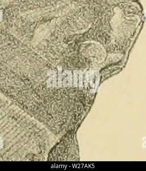 Archive image from page 258 of Denkschriften - Österreichische Akademie der. Denkschriften - Österreichische Akademie der Wissenschaften  denkschriftens701900akad Year: 1850 - Stock Photo
