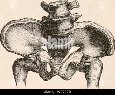 Archive image from page 269 of The cyclopædia of anatomy and - Stock Photo