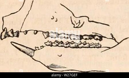 Archive image from page 277 of The cyclopædia of anatomy and - Stock Photo