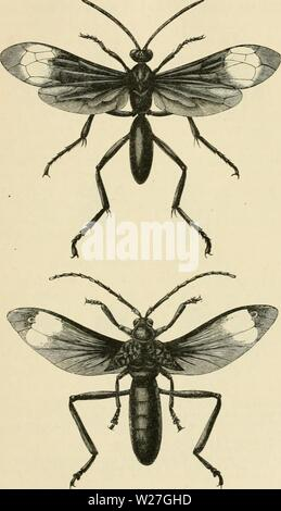 Archive image from page 278 of Darwinism  an exposition of - Stock Photo
