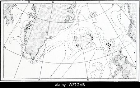Archive image from page 278 of The Danish Ingolf-expedition (1899-1953). The Danish Ingolf-expedition  danishingolfex5bpt5a8daniuoft Year: 1899-1953  HYDROIDA II 127 considerably into the arctic areas, and also sonthward into warmer seas; it is mentioned from the Mediterranean to Nova Zembla, but the most numerous finds have been made in the boreal region. The species is known from both sides of the Atlantic, and also from the Pacific, which renders its occurrence within the area investigated the more remarkable (fig. LXVI). It is very common in the British waters, and along the west coast of - Stock Photo