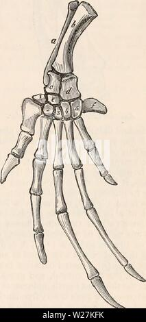 Archive image from page 288 of The cyclopædia of anatomy and - Stock Photo
