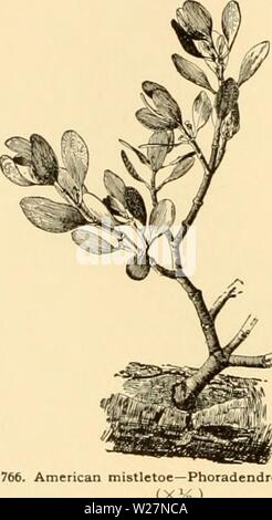 Archive image from page 299 of Cyclopedia of American horticulture - Stock Photo