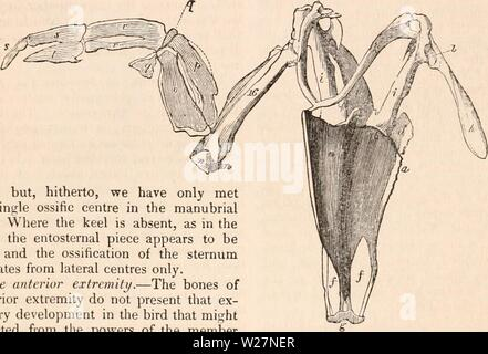 Archive image from page 299 of The cyclopædia of anatomy and - Stock Photo