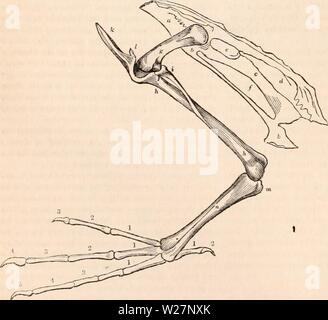 Archive image from page 301 of The cyclopædia of anatomy and - Stock Photo