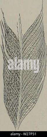 Archive image from page 302 of Denkschriften der Medicinisch-Naturwissenschaftlichen Gesellschaft zu. Denkschriften der Medicinisch-Naturwissenschaftlichen Gesellschaft zu Jena  denkschriftender1104medi Year: 1879 - Stock Photo
