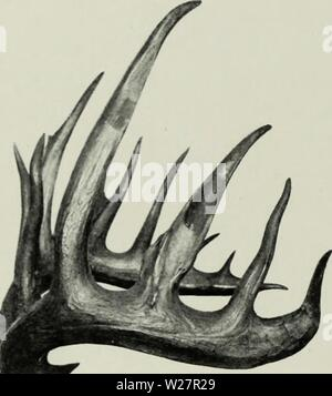 Archive image from page 307 of The deer of all lands; - Stock Photo