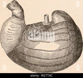 Archive image from page 313 of The cyclopædia of anatomy and - Stock Photo
