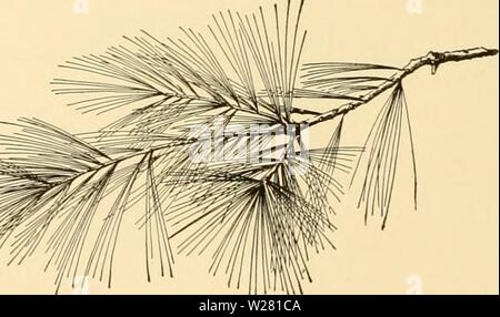 Archive image from page 339 of Cyclopedia of American horticulture - Stock Photo