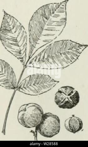 Archive image from page 362 of Cyclopedia of farm crops . Cyclopedia of farm crops : a popular survey of crops and crop-making methods in the United States and Canada  cyclopediaoffarm00bailuoft Year: 1922, c1907 - Stock Photo
