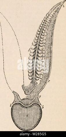 Archive image from page 364 of The cyclopædia of anatomy and - Stock Photo