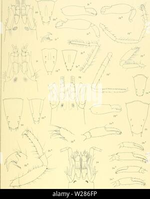 Archive image from page 370 of The Decapoda of the Siboga - Stock Photo