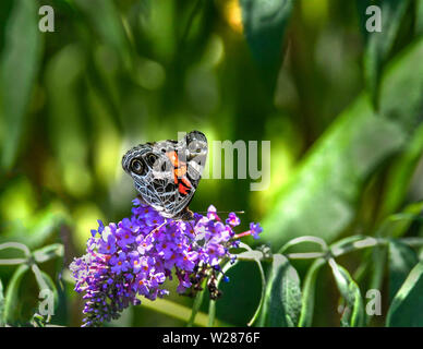 A butterfly sitting on a purple flower. - Stock Photo