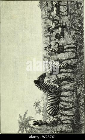 Archive image from page 380 of De Angola á contra-costa; descripção. De Angola á contra-costa; descripção de uma viagem atravez do continente africano  deangolacontrac01cape Year: 1886 - Stock Photo