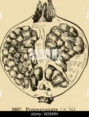 Archive image from page 388 of Cyclopedia of American horticulture