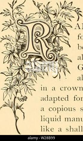Archive image from page 407 of Cyclopedia of practical floriculture (1884). Cyclopedia of practical floriculture  cyclopediaofprac00turn Year: 1884  SMILJlX. ARELY has any climbing vine taken such hold of the popular heart for decorative purposes as has this delicate, twining, bright-leaved beauty. Thousands of yards are used every year for decorations on all occasions, both joyous and sad. It is a native of the Cape of Good Hope, and constitutes an independent order of plants nearly allied to the Lilies. The root is formed by numerous tubers united vn, from which the vines spring. A fertile s - Stock Photo