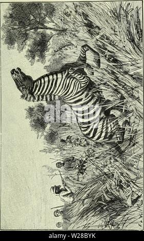 Archive image from page 412 of De Angola á contra-costa; descripção. De Angola á contra-costa; descripção de uma viagem atravez do continente africano  deangolacontrac01cape Year: 1886 - Stock Photo