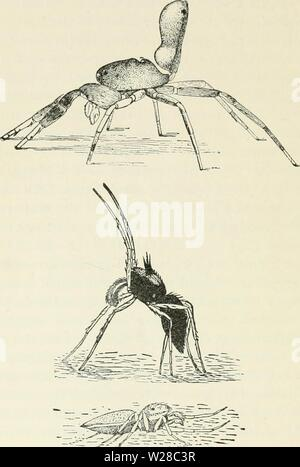 Archive image from page 413 of Darwin, and after Darwin An - Stock Photo